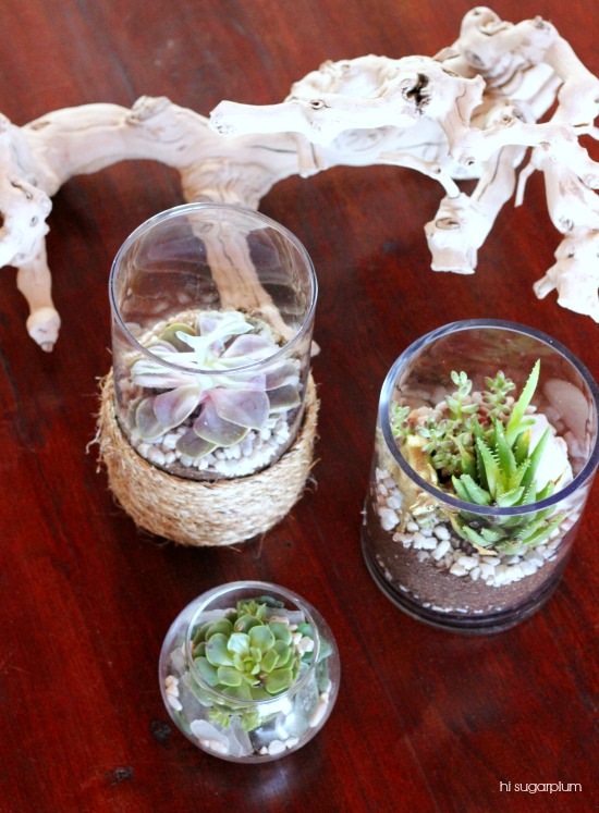 Hi Sugarplum | Dollar Store Terrariums