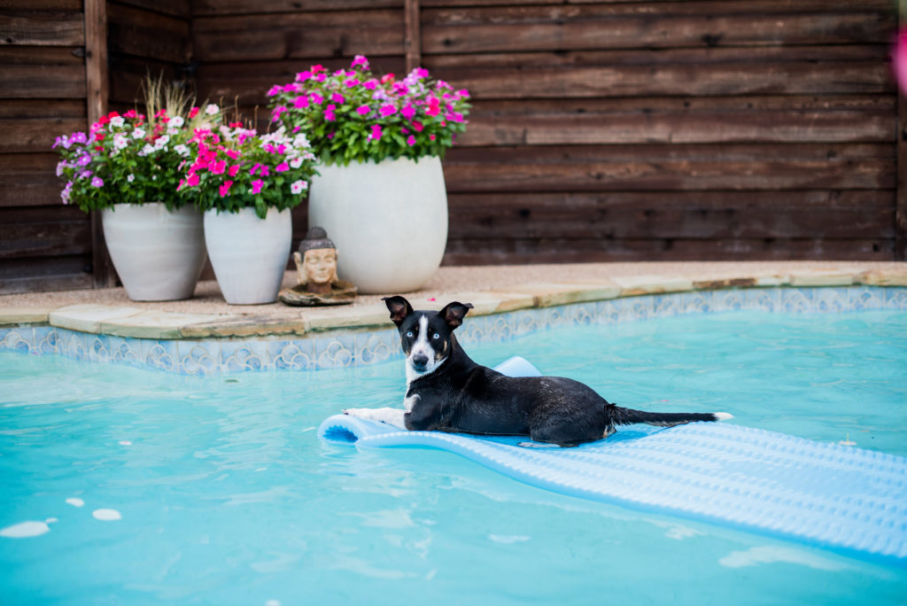 black and white dog floating on pool float behind backyard privacy fence