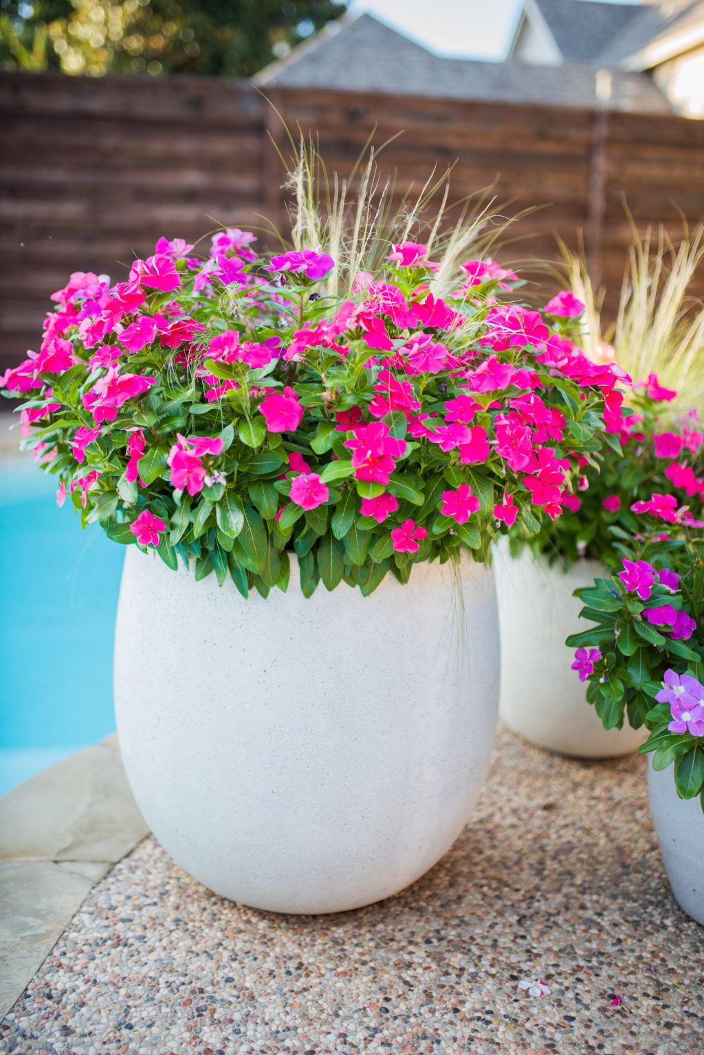 impatiens in concrete planters by texas pool in summer
